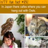 japanese cafes where you hang out with owls wtf