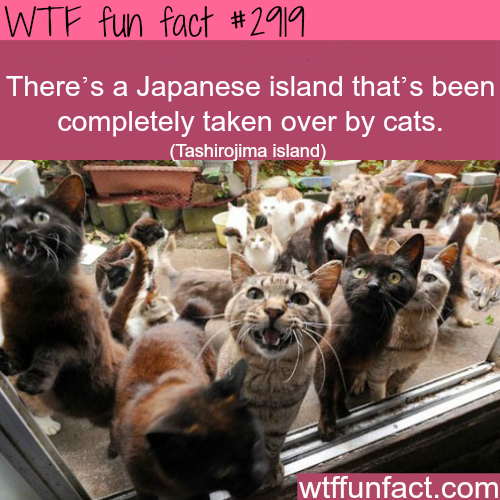 Japanese island full of cats -  WTF fun facts