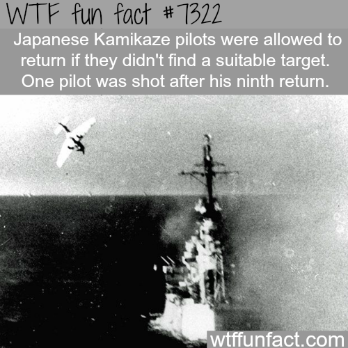 Japanese Kamikaze - WTF fun fact