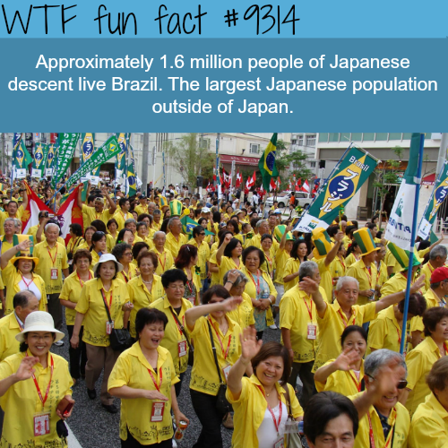 Japanese People in Brazil - WTF fun fact