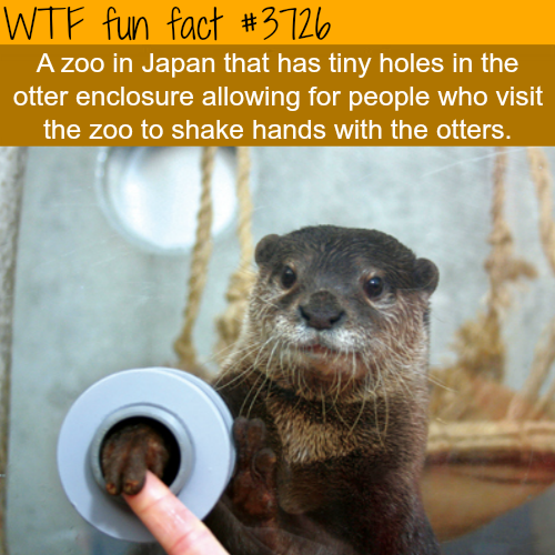 Japanese zoo where you can shake hand with otters - WTF fun facts