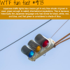 japans traffic lights wtf fun facts