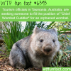 job openings in australia wtf fun facts