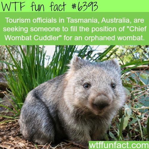 Job openings in Australia - WTF fun facts