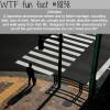 johatsu wtf fun facts