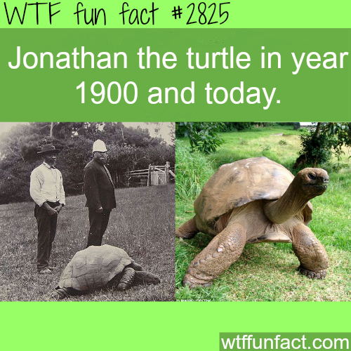 Jonathan the turtle - WTF fun facts