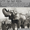jumbo wtf fun facts