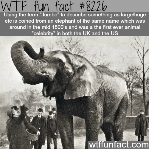 Jumbo - WTF fun facts