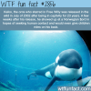 keiko the orca in free willy