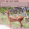 key deer wtf fun facts