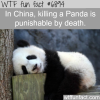 kill a panda or endangered animals in china can