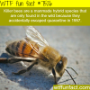 killer bees wtf fun fact