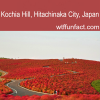 kochia hill hitachinaka city japan places to visit