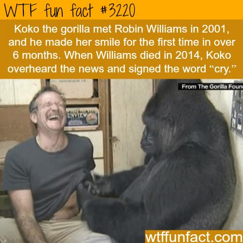 Koko the Gorilla with Robin Williams -WTF fun facts