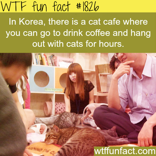 Korea's cats cafe -WTF fun facts