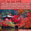 kyoto japan wtf fun facts