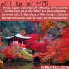 kyoto japan wtf fun facts