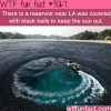 la reservoir covered with black balls