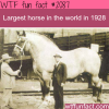 largest horse in the world