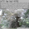 largest spider webs wtf fun facts