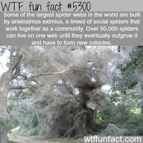 Largest spider webs - WTF fun facts