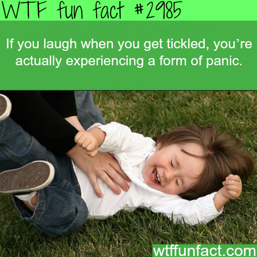 Laughing when getting tickled -  WTF fun facts
