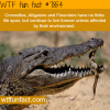 life span of an alligator wtf fun facts