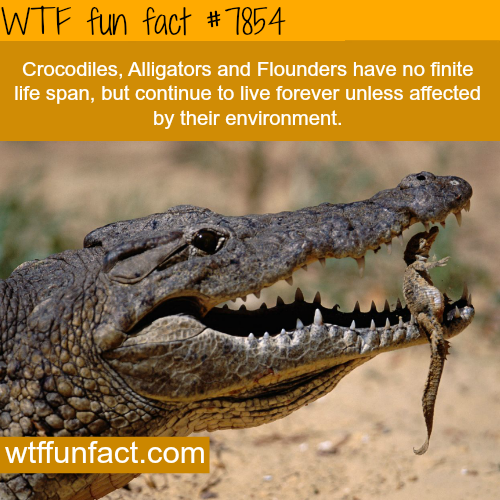 Life span of an alligator - WTF fun facts