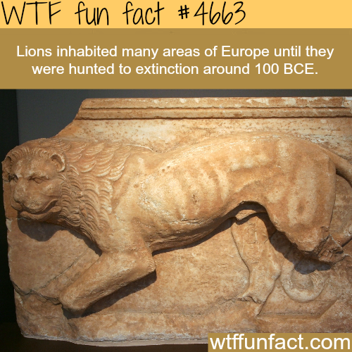 Lions in Europe - WTF fun facts