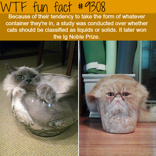 Liquid cats - WTF Fun Fact