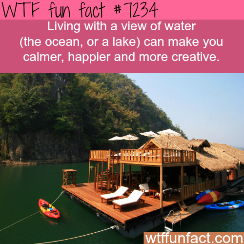 Living near water can make you happier - WTF Fun Fact