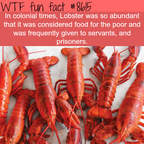 Lobsters were a poor man's food - WTF fun facts