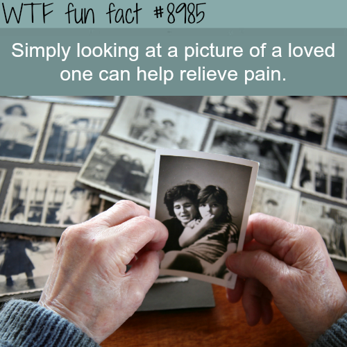 looking at a picture of a loved one - WTF fun facts