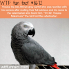 lost african grey parrot told the veterinarian his