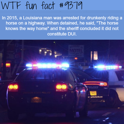 Louisiana man arrested for drunkenly riding a horse - WTF fun facts