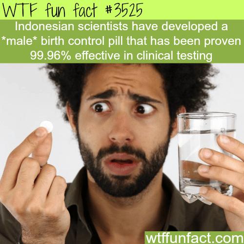 Male birth control are here - WTF fun facts