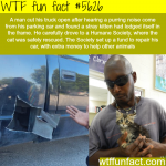 man cut his truck open to save a kitten wtf fun