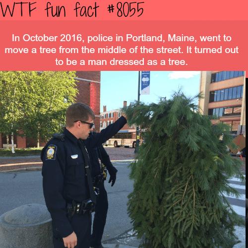 Man dressed as a tree stops traffic in Portland