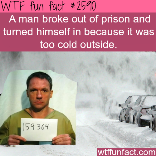Man escapes prison and turns himself because of cold weather - WTF fun facts