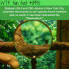 manhattant wtf fun facts