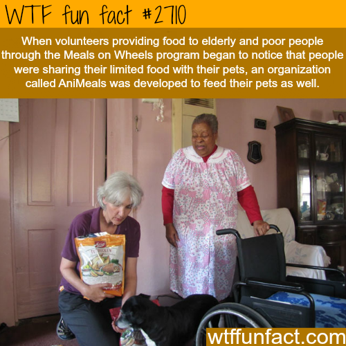 Meals on Wheels and Animeals -WTF funfacts