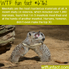 meerkats facts wtf fun fact
