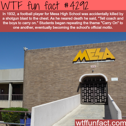 Mesa High School -  WTF fun facts