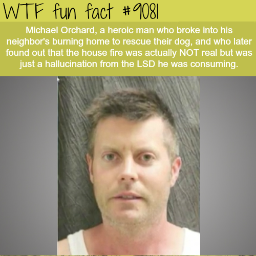 Michael Orchard - WTF fun fact
