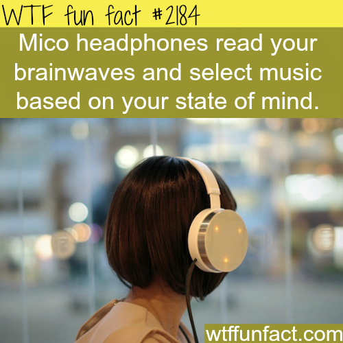 Mico headphones - WTF fun facts