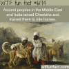 middle easterners and indians trained cheetahs to