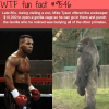 mike tyson vs gorilla wtf fun fact