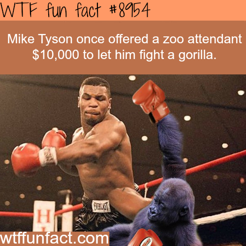 Mike Tyson wanted to fight a gorilla - WTF fun facts