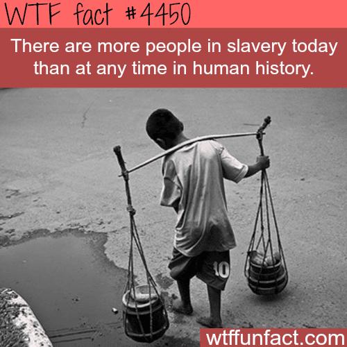 Modern day slavery -   WTF fun facts