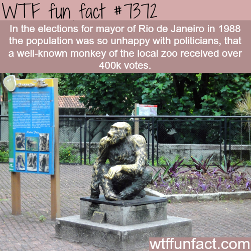 Monkey received more than 400